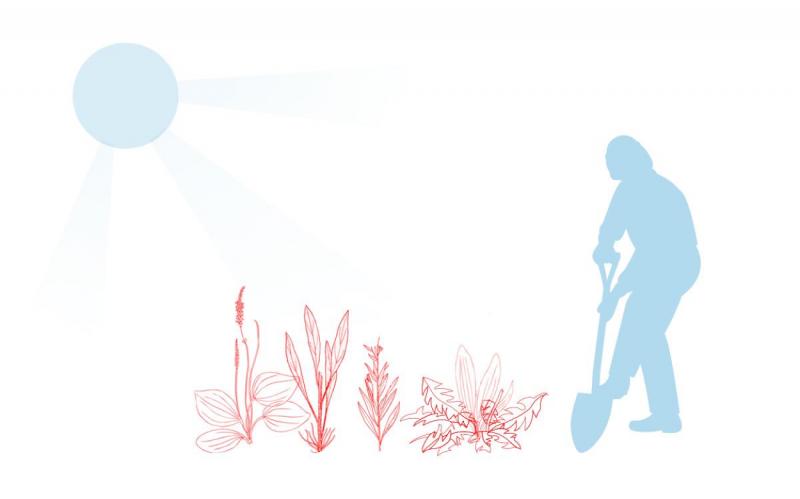 Как победить сорняк на дачном участке