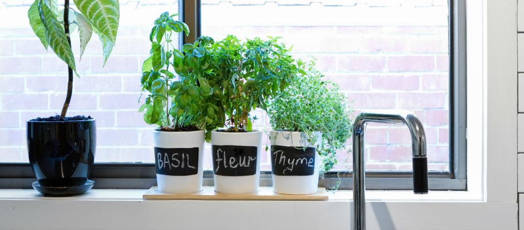 Витамины на подоконнике: какую зелень можно вырастить осенью и зимой