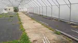 Как построить теплицу для зимнего выращивания: фото и видео