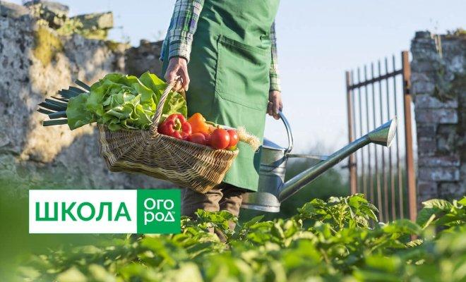 Существует ли удобрение для всего огорода сразу