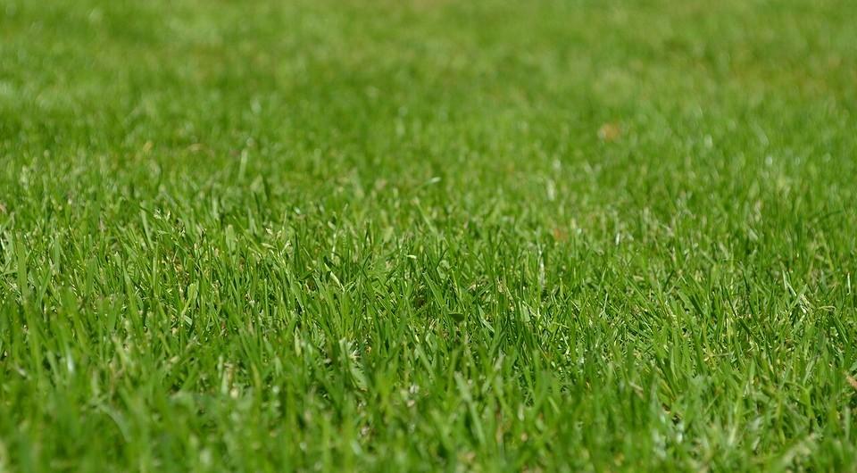 Как посеять газон: полезные советы и пошаговая инструкция