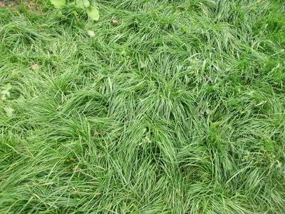 Красивый газон своими руками. Посевной газон