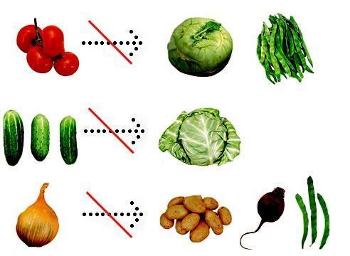 Какие растения нельзя сажать рядом; таблица