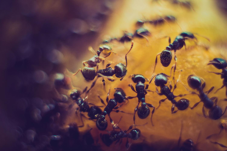 Избавляемся от муравьев: самые эффективные способы борьбы