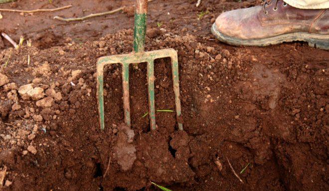 Как глинистую почву сделать плодородной и рыхлой