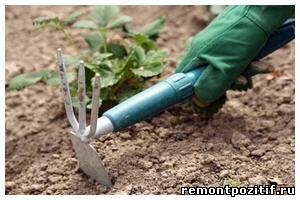 Сухая и песчаная почва на участке. Как улучшить структуру почвы. Выбор и посадка растений в песчаную почву