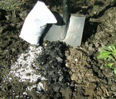 Как удобрить землю: обработка почвы и основные виды удобрений (80 фото)