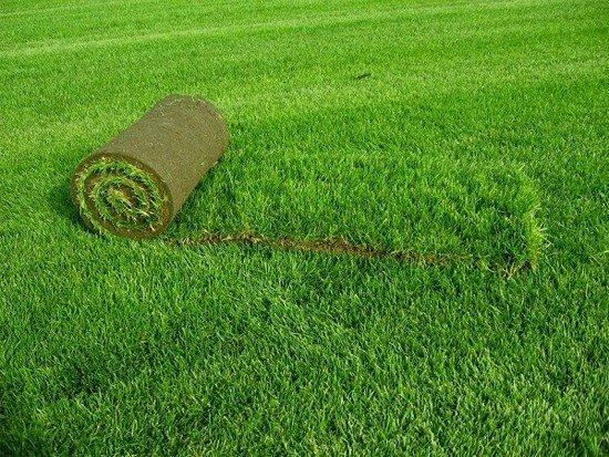 Искусственный газон на даче: достоинства и недостатки