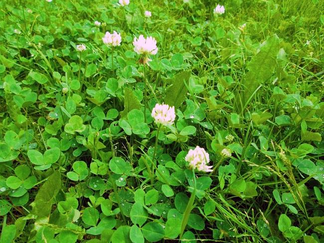 Лучшие газонные травы для посадки в различных условиях
