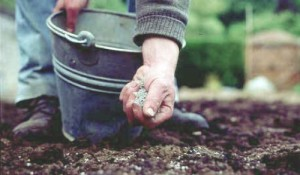 Красивый газон на участке: как уложить идеальный газон своими руками? (100 фото)
