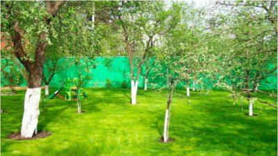 Необходимость соблюдения расстояния от забора до деревьев,СНиП, правила посадки, расстояние между насаждениями