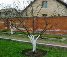 Деревья возле дома; виды которые можно и нельзя сажать. 100 фото лучших вариантов для посадки