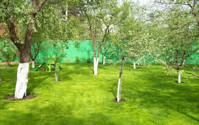 Какие садовые растения нельзя сажать рядом