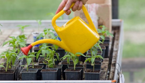 Чем подкормить рассаду перца: когда вносить удобрения и какие составы использовать