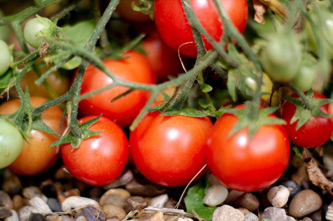 Чем подкормить рассаду помидоров и перца в домашних условиях, удобрения
