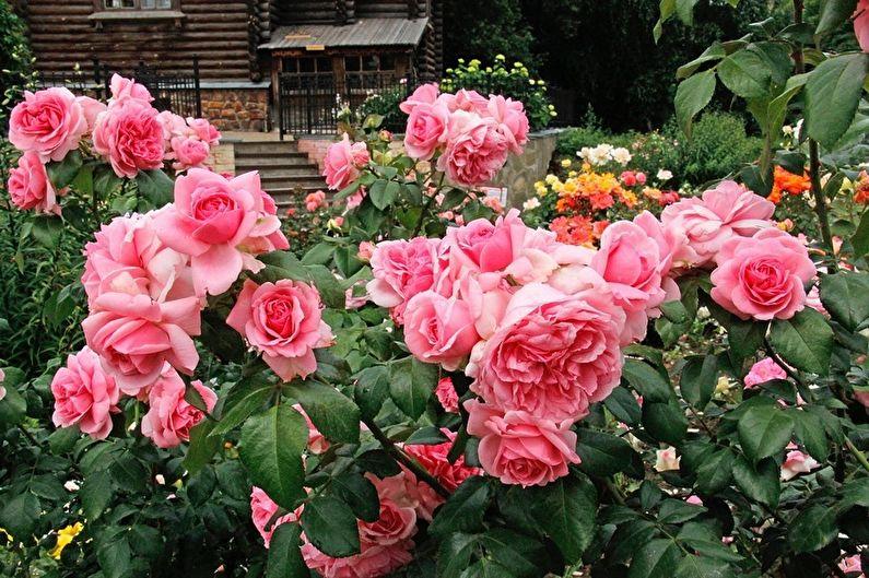 Роза Флорибунда (90 фото): виды и уход
