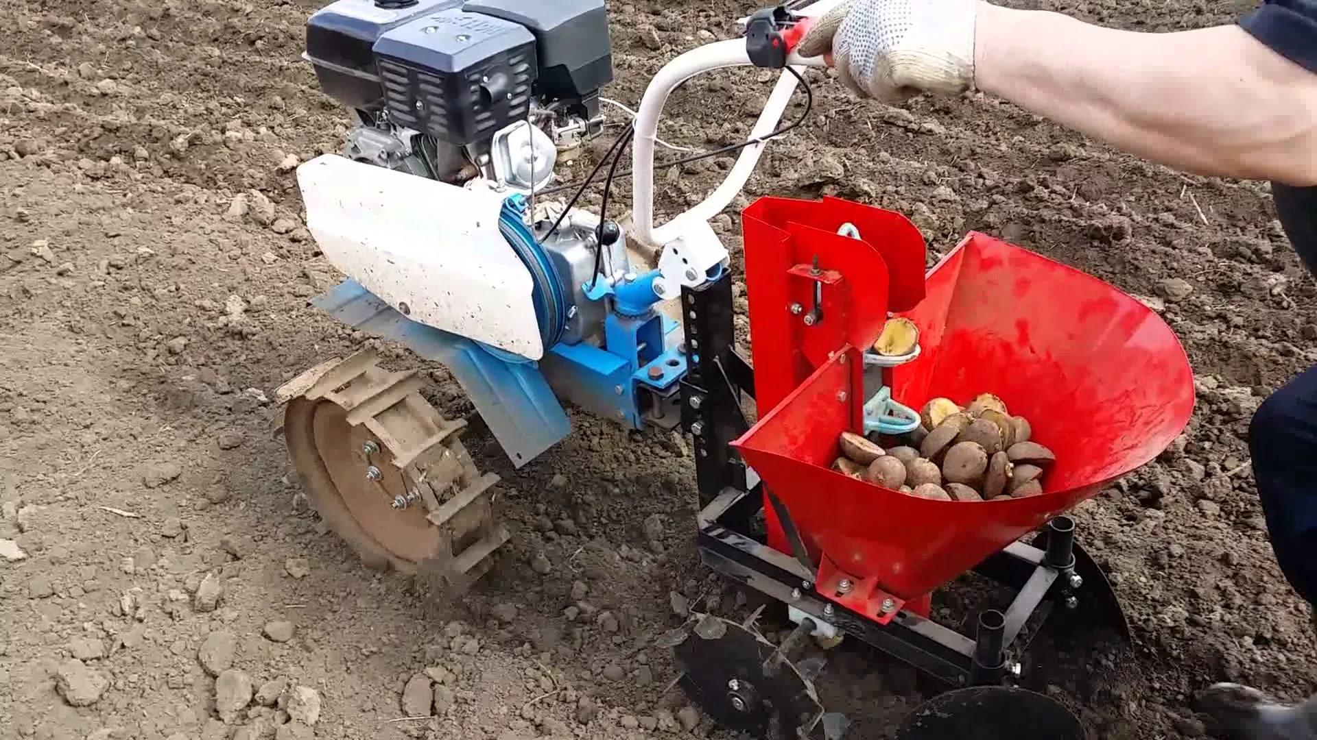Технология правильной посадки картофеля мотоблоком