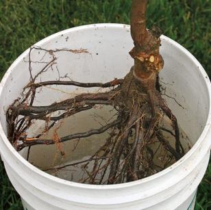 Как правильно сажать плодовые деревья – саженцы яблонь, груш и вишен на участке