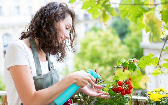 Огород на балконе: идеи, фото, советы для начинающих