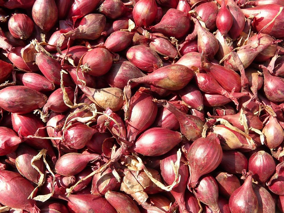 Узнайте, когда можно посадить лук-севок