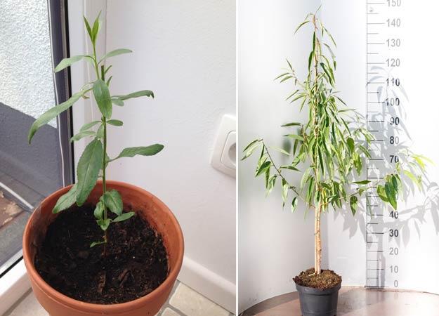 Правила выращивания зелени салата на домашем подоконнике
