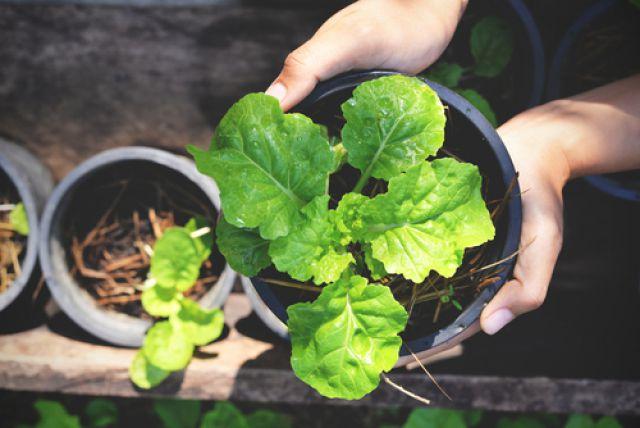 Грядки на подоконнике. Дома можно вырастить салат, горчицу и даже свеклу