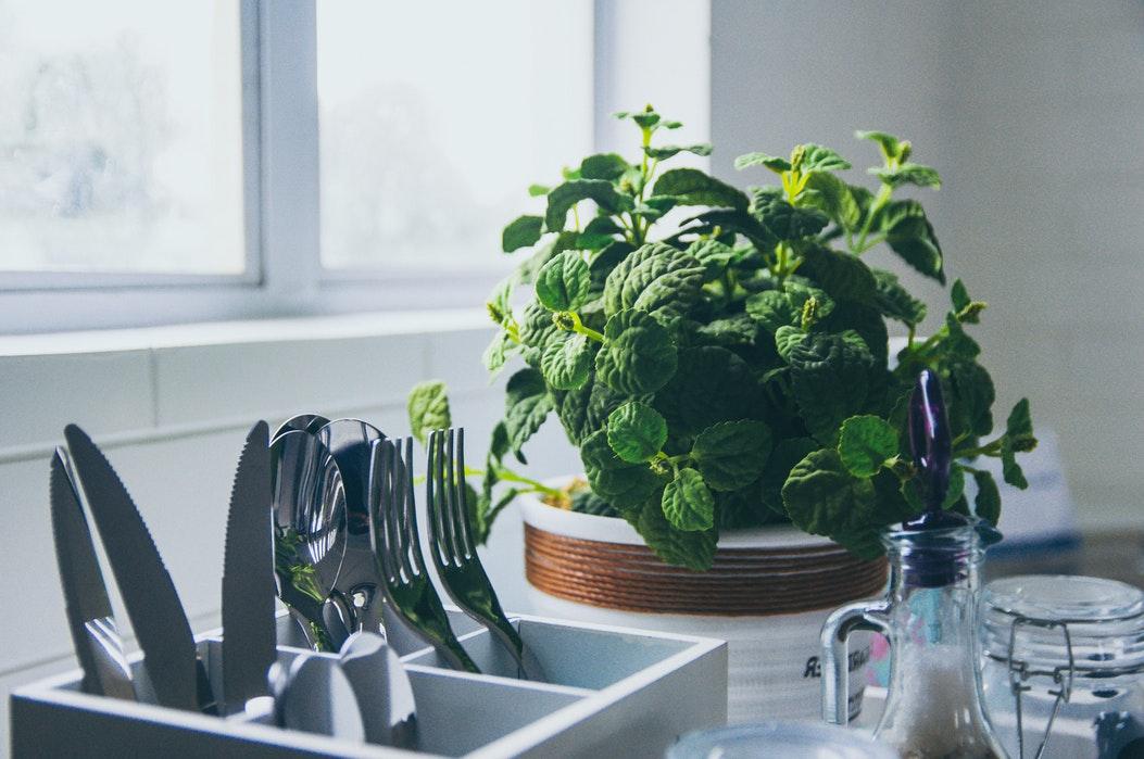 Переносим сад на подоконник: как вырастить зелень в собственной мини-теплице