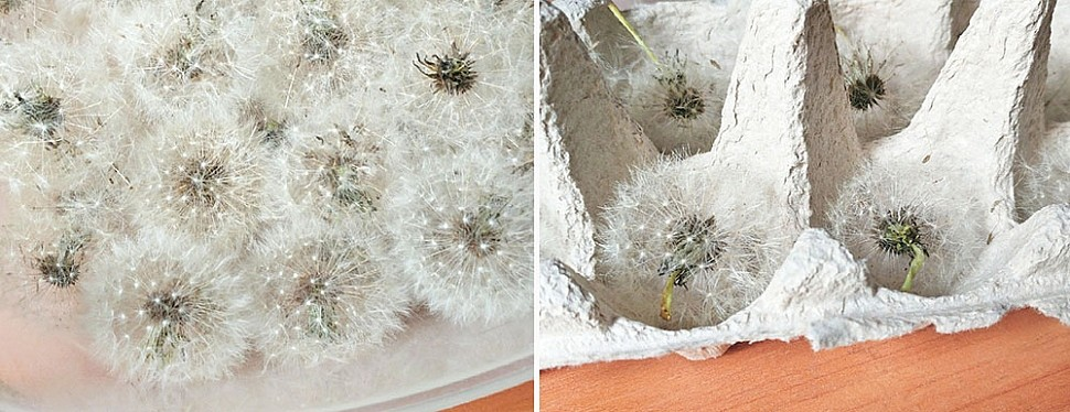 Как сушить цветы для работы с эпоксидкой