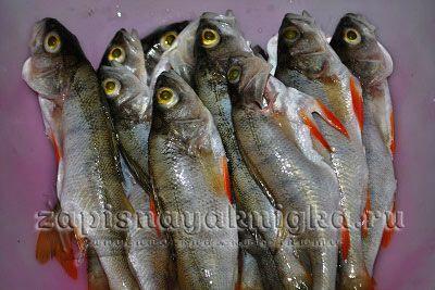 Рыба горячего копчения рецепты для коптильни и духовки