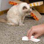 Как убрать запах кошачьей мочи с дивана, ковра, пола и обуви простыми средствами