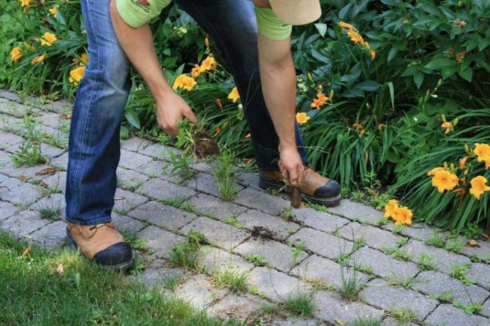 Узнаем как избавиться от травы между тротуарной плиткой? Средства от сорняков