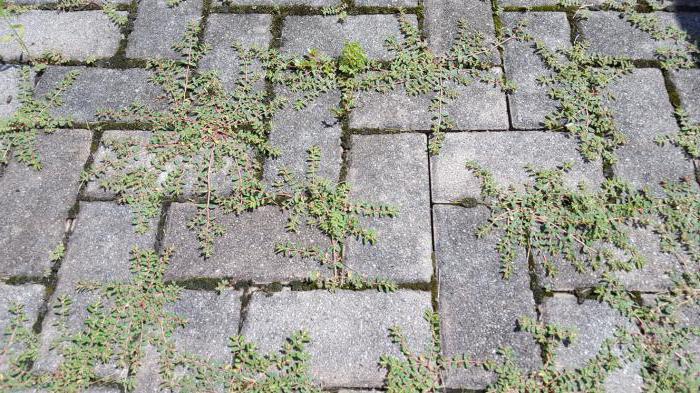 Установка бордюра для тротуарной плитки
