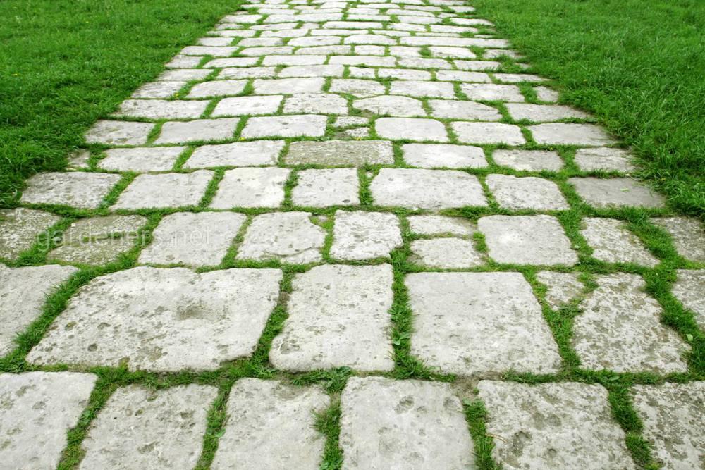 Как избавиться от растущей между тротуарными плитами травы
