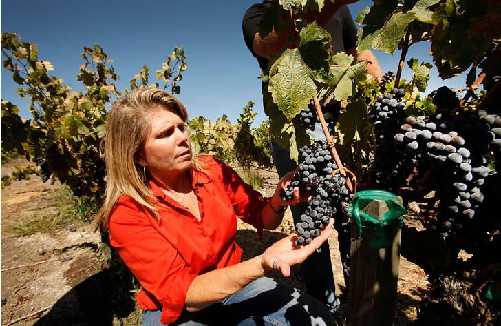 Как нарезать черенки винограда и сохранить их до весны