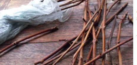 Хранение черенков (чубуков) винограда