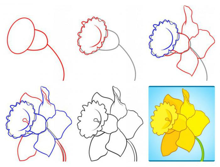 Узнаем как правильно нарисовать нарциссы поэтапно. Узнаем как правильно нарисовать нарциссы карандашом с детьми