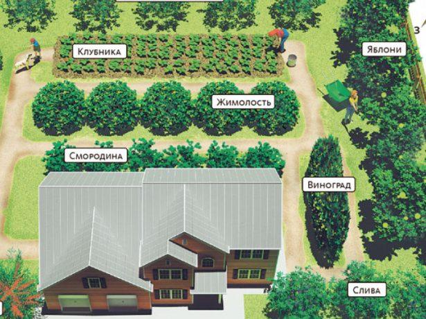 Планировка сада: какие принципы необходимо знать