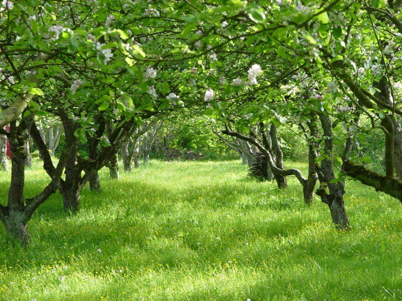 Закладка сада; что важно знать? Деревья на садовом участке; схемы закладки сада