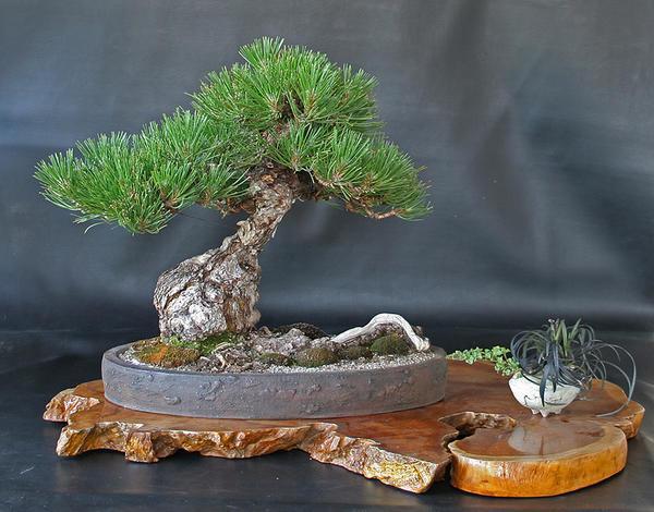 Декоративное дерево в современном декоре