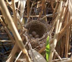 Гнездо из веток; 60 фото как свить декоративное украшение своими руками