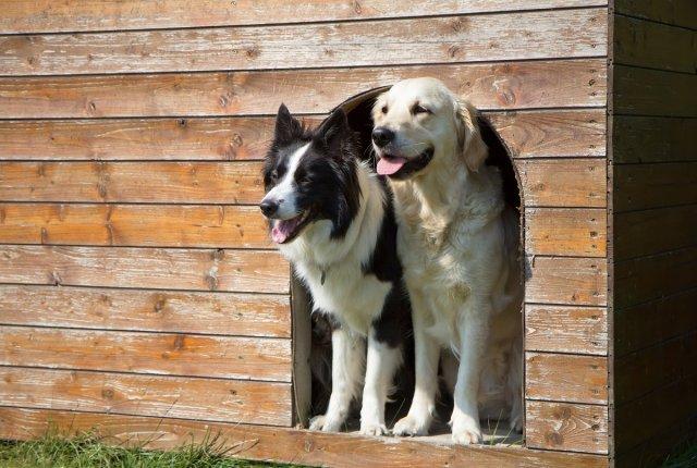 Как построить будку для собаки своими руками – от идеи до установки