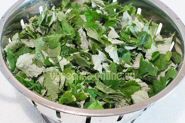 Запасаемся листьями малины для ароматного чая! Ферментация в домашних условиях