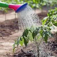 Полив грядок легко и просто. Разновидности систем полива для дачи и огорода