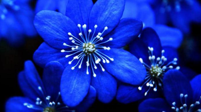Как получить голубой цвет из красок гуашь. Как получить синий цвет? Смешивание цветов