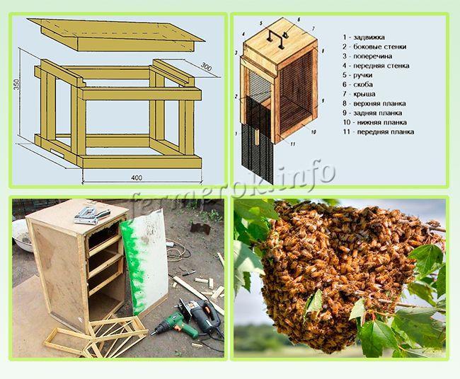 Как поймать рой пчел в ловушку и пересадить в улей