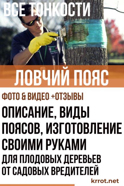 Ловчий пояс для плодовых деревьев от садовых вредителей: описание, виды поясов, изготовление своими руками (Фото; Видео) Отзывы
