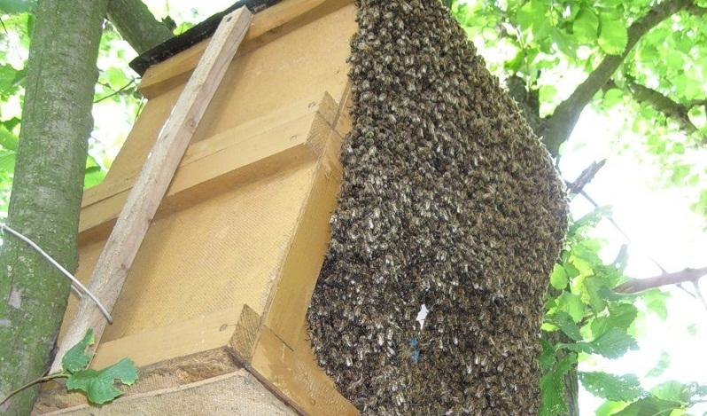 Ловля пчел. Как сделать ловушку для пчел своими руками