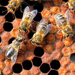 Как сконструировать и правильно расположить на своём участке ловушку для пчёл
