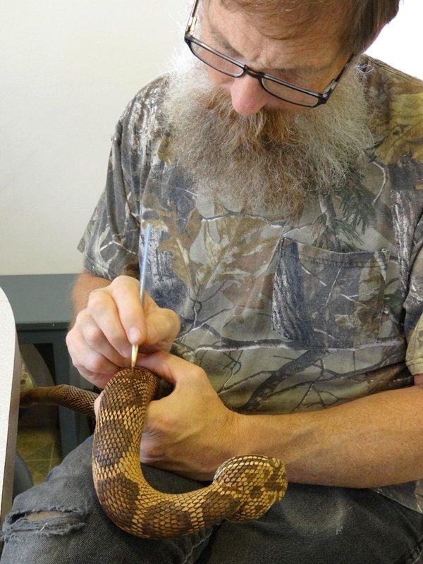 Как сделать змею своими руками: символ года 2013 в лучших мастер-классах