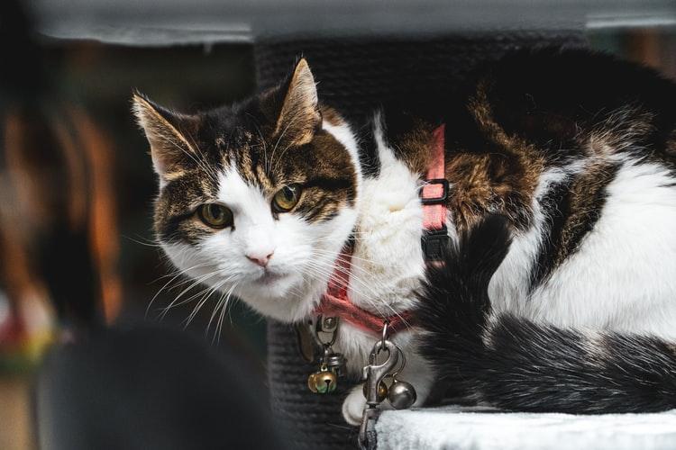 Шлейка для кошек и котов: как выбрать подходящую модель